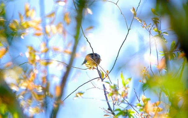 Фото обои листья, птица, обои, ветка, природа