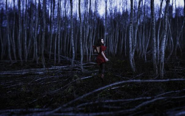 Фото обои лес, девушка, ночь