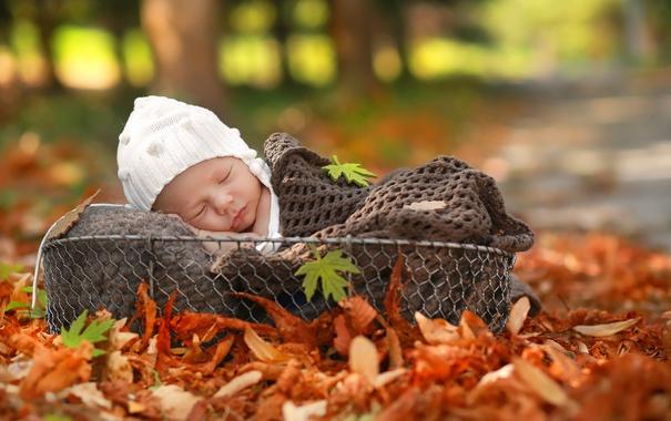 Фото обои осень, корзина, младенец