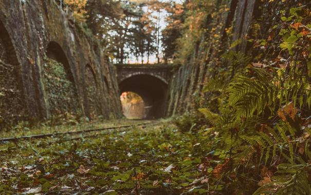 Фото обои стены, мост, солнечный свет, куст, деревья, железнодорожные, листья