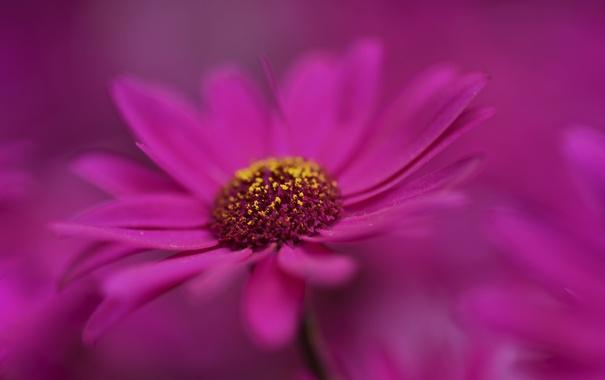 Фото обои цветок, краски, растение, лепестки
