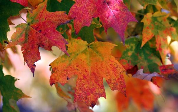 Фото обои осень, листья, природа, цвет