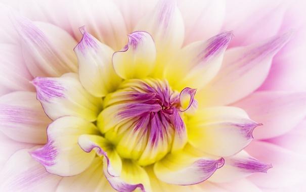 Фото обои макро, цветок, природа