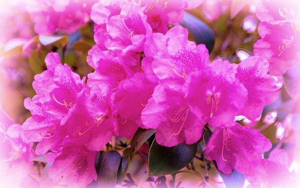 Фото обои листья, макро, Цветок, flower