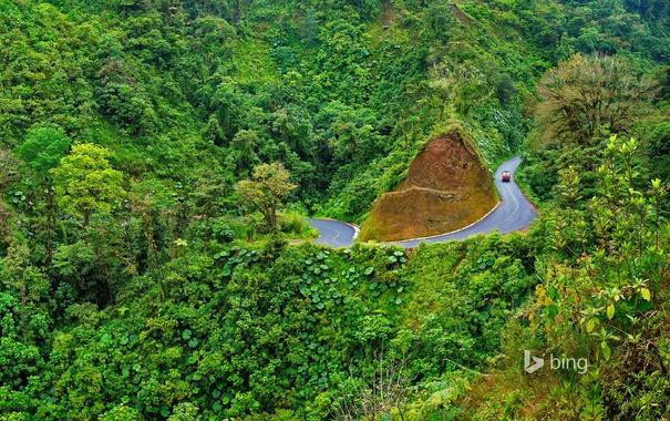 Фото обои лес, деревья, дорога, Arenal Volcano National Park, горы, Коста-Рика