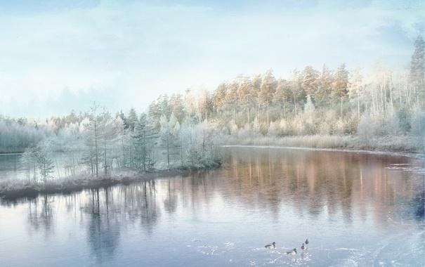 Фото обои птицы, природа, река