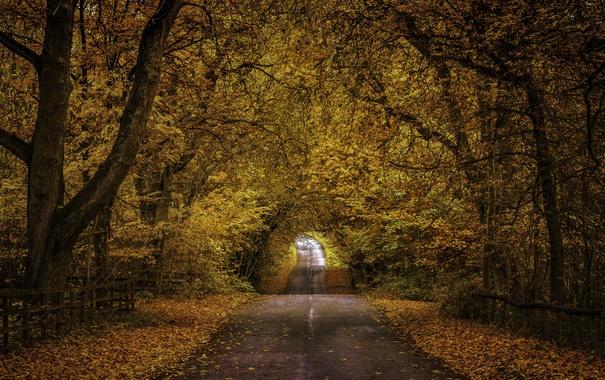 Фото обои забор, листва, дорога, деревья, ветки, осень, листья