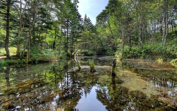 Фото обои green, wood, water, marsh