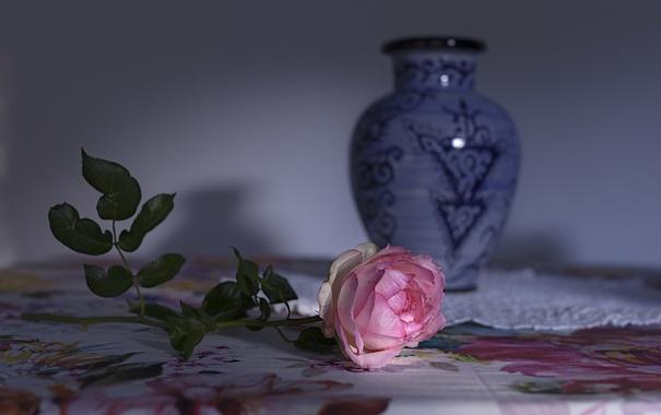 Фото обои роза, фон, цветок