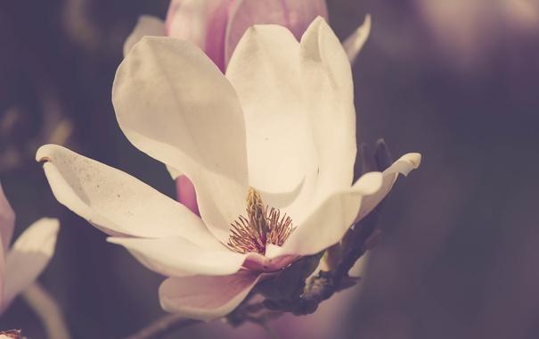 Фото обои цветок, лепестки, белые