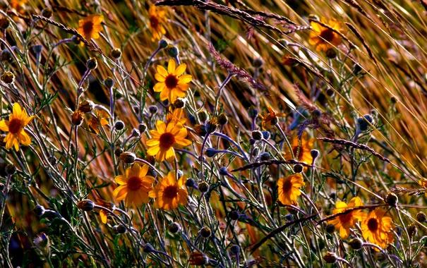 Фото обои поле, осень, трава, цветы, луг