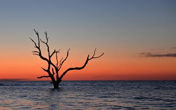 Фото обои lake, tree, dusk, branches