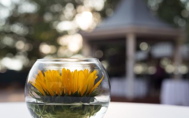 Фото обои лепестки, цветок, желтые
