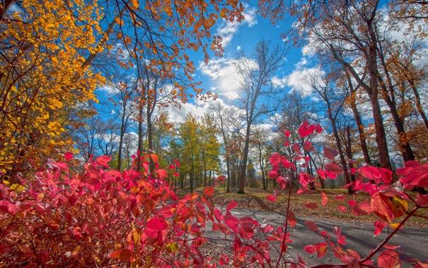 Фото обои краски, парк, дорога, деревья, листья, багрянец, осень