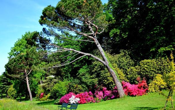 Фото обои зелень, трава, деревья, парк, Швейцария, дорожка, скамейки