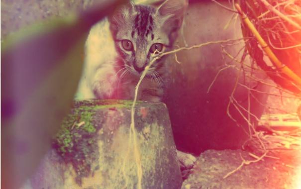 Фото обои взгляд, котёнок, полосатый, cat, cute, pet, kittens