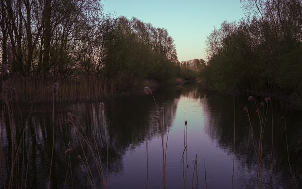 Фото обои деревья, пруд, Природа
