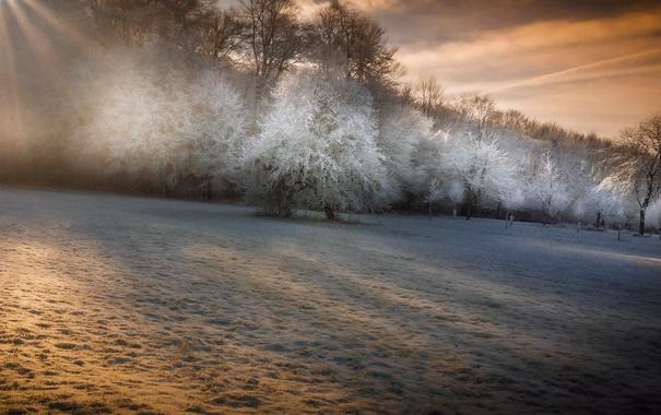 Фото обои зима, иней, деревья