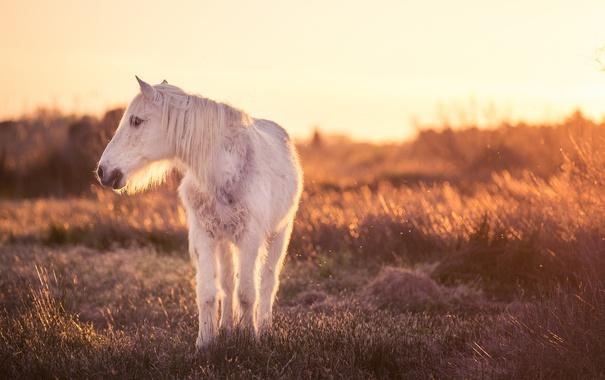 Фото обои природа, свет, конь