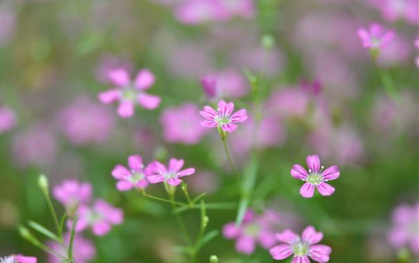 Фото обои макро, растение, лепестки, сад, луг