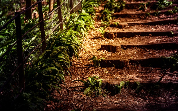 Фото обои заросшая, лестница, старая, трава, ограда, песок