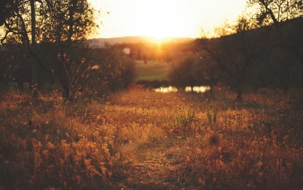 Фото обои сельская местность, деревья, боке, куст, поле, холмы, солнце