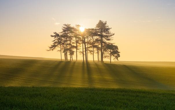Фото обои поле, свет, деревья