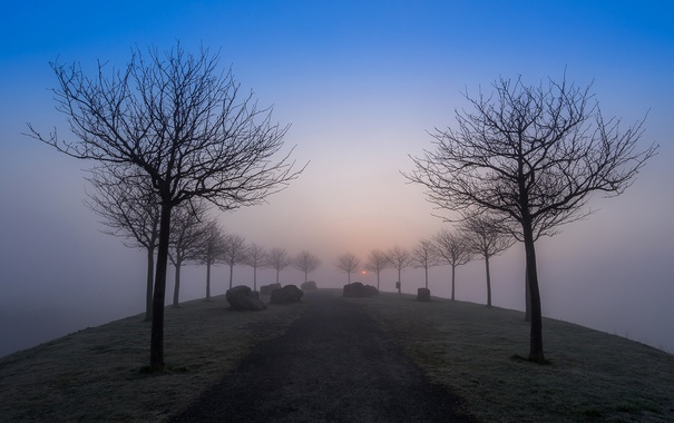 Фото обои дорога, небо, деревья, туман, вечер