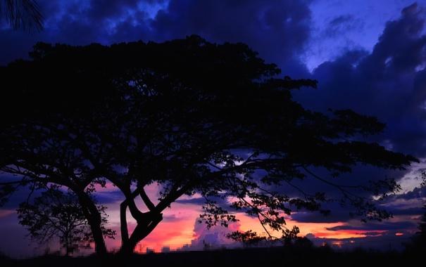 Фото обои пейзаж, облака, зарево, силуэт, ночь, дерево