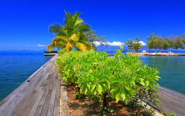 Фото обои небо, облака, деревья, пальмы, причал, горизонт, кусты