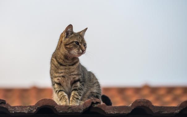 Фото обои крыша, кот, усы, взгляд