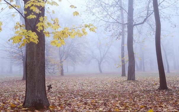 Фото обои туман, деревья, листья, крест, осень, могила, лес