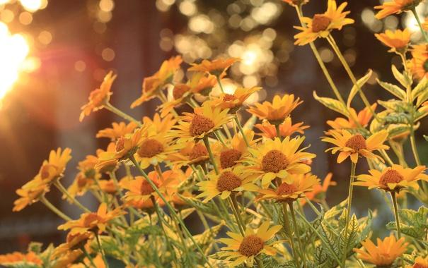 Фото обои солнце, деревья, цветы, стебли, лепестки, боке