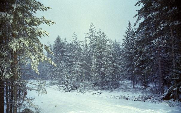Фото обои зима, дорога, лес, снег, деревья