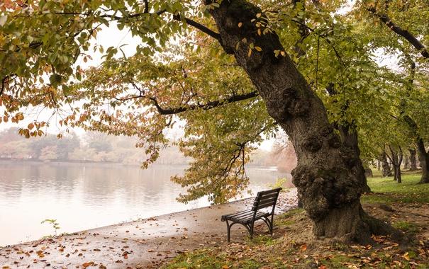 Фото обои colors, trees, autumn, Washington, fall