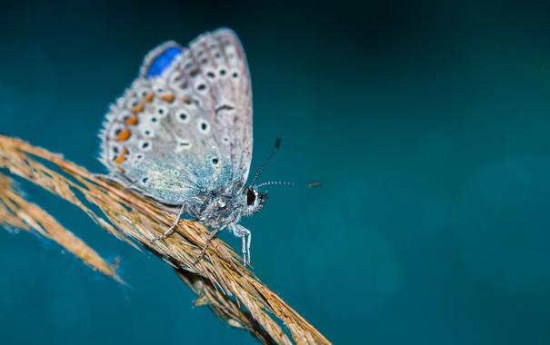 Фото обои капли, крылья, ветка, wings, боке, bokeh, drops