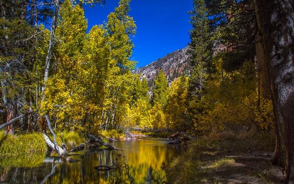 Фото обои США, лес, река, осень, деревья, Колорадо, горы