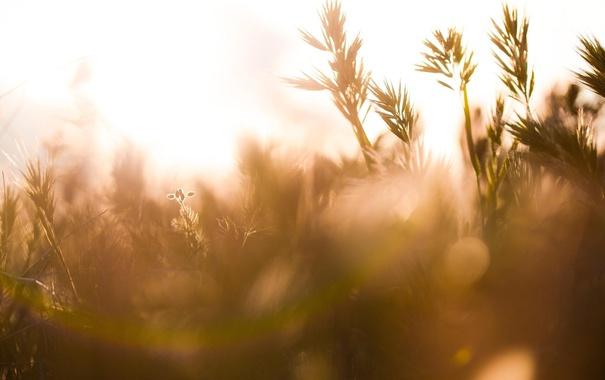 Фото обои лето, цветы, природа, блики, растения