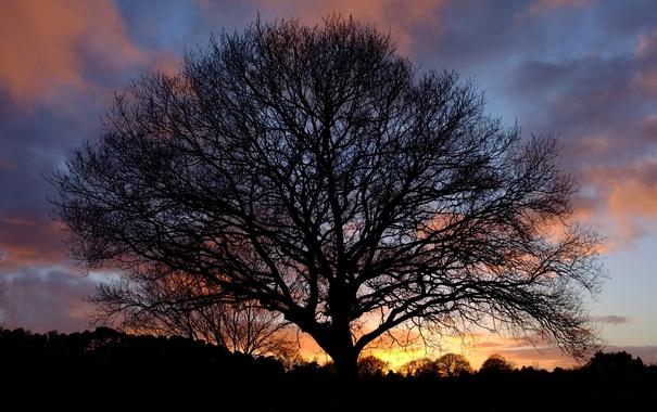 Фото обои закат, природа, дерево, силуэт