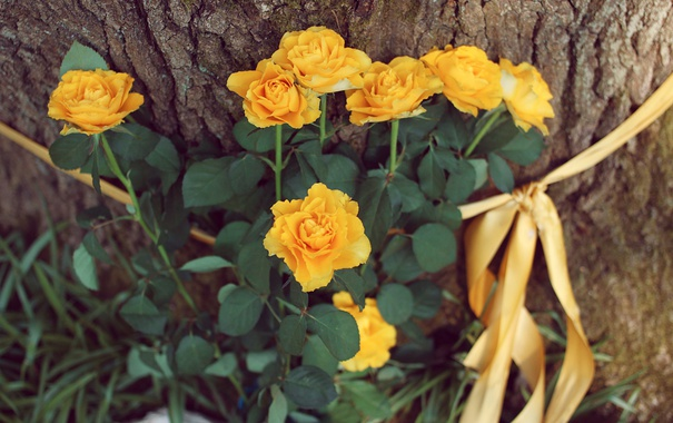 Фото обои цветы, дерево, желтые, лепестки, лента, кора, ленточка