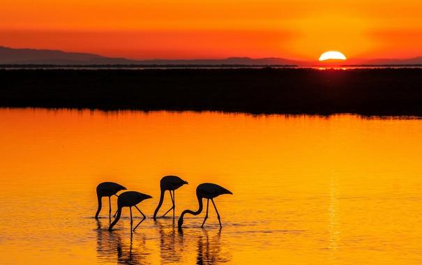 Фото обои море, птицы, ночь