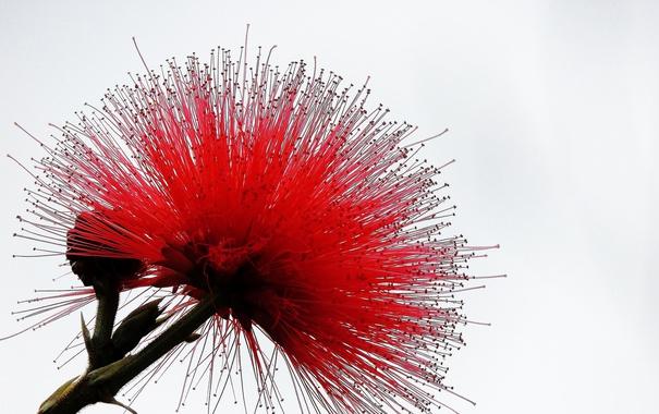 Фото обои природа, цветок, экзотика, лепестки
