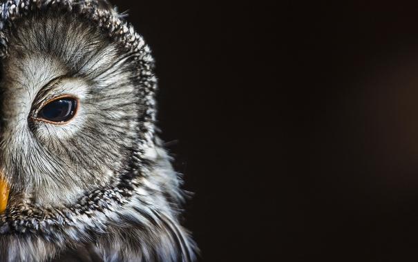 Фото обои bird, animal, owl
