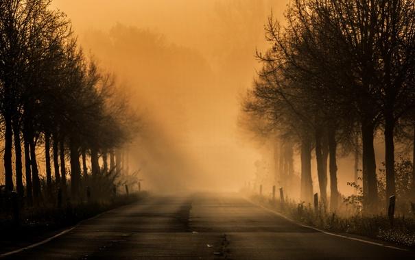 Фото обои дорога, ночь, туман