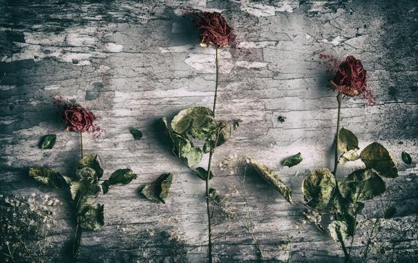 Фото обои текстура, фон, цветы