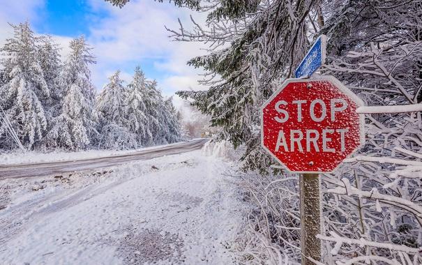 Фото обои дорога, снег, деревья, природа, road, trees, winter