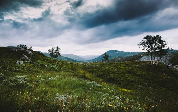 Фото обои grass, trees, flowers, clouds, hills