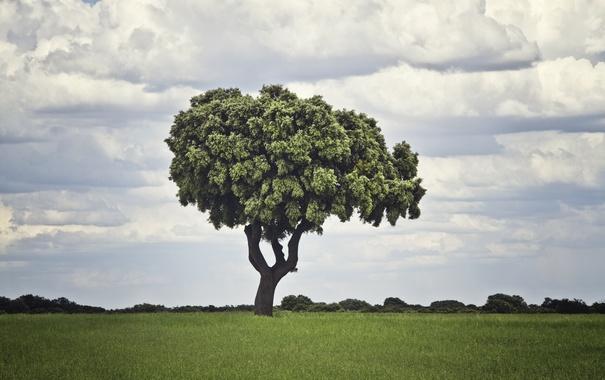 Фото обои поле, трава, облака, дерево, grass, field, clouds