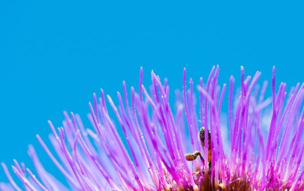 Фото обои цветок, насекомое, лепестки, небо