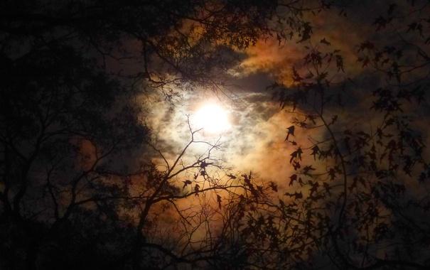 Фото обои осень, листья, облака, ночь, ветки, силуэт